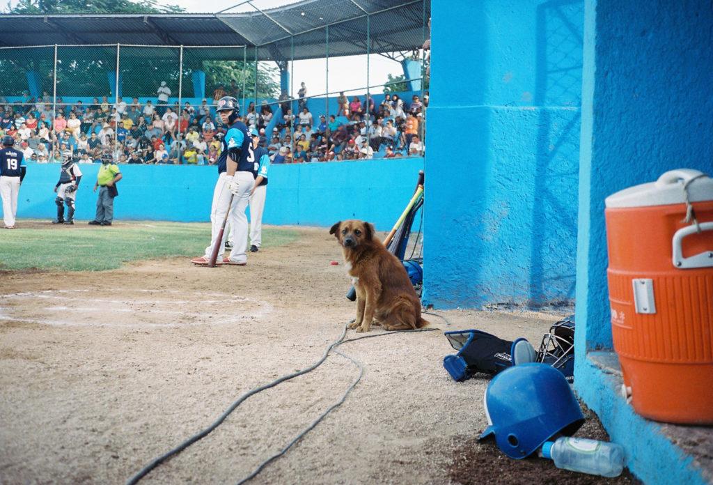 #1日1海外野球 #5 メキシコの野球場とあそびにきた犬